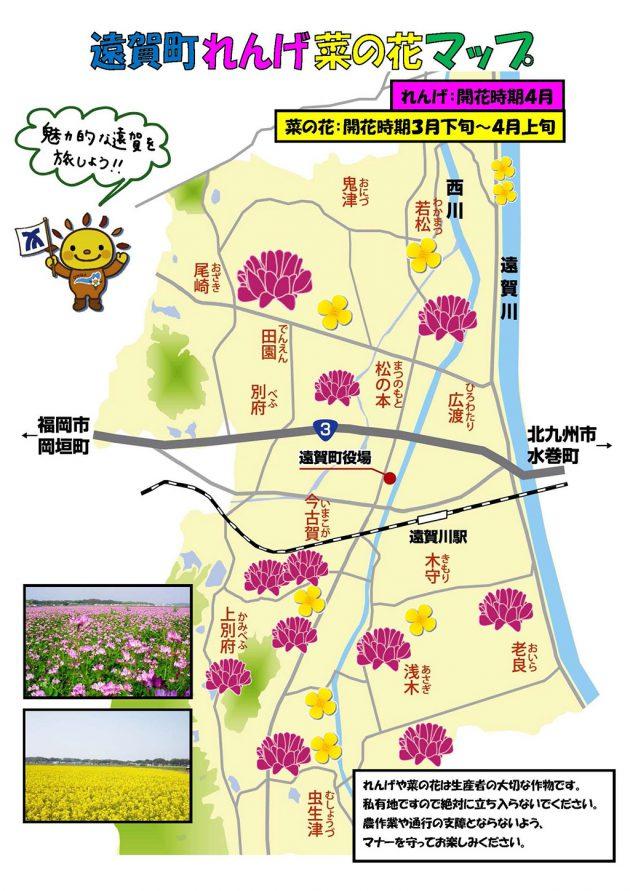 遠賀町では今菜の花が盛りですよ - 遠賀町青年部活性協議会