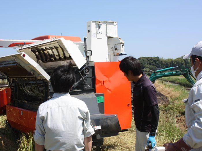菜種の刈取り